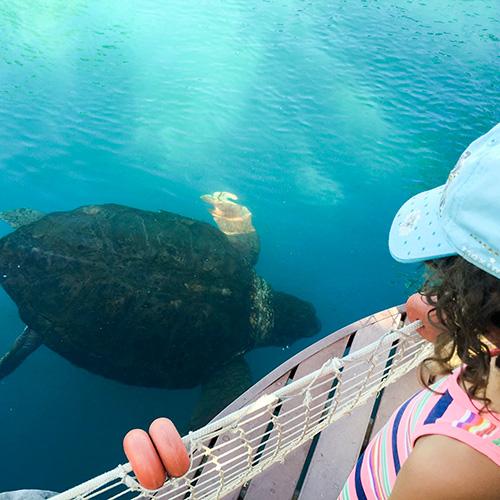 Für Kinder sehr interessant - das Schildkrötenreservat bei Praia do Forte